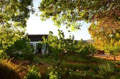 Self Catering in McGregor / Orchard Cottage is a beautiful vintage self-catering cottage situated in an apricot orchard in the town of McGregor, in . Self Catering Cottages, Sand Pit, Lush Garden, Farmhouse Plans, Weekend Getaways, Cape, Budget, Beautiful, Litter Box