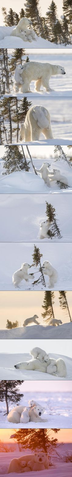 Photographer Daisy Gilardini spent 117 hours waiting in sub-zero temps for a chance to photo a family of Polar Bears