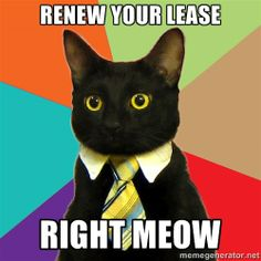 Business Cat - renew your lease Right Meow