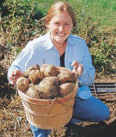 Harvest Bushels of Potatoes From the Grow Bed, Square Foot Gardening, Potato Bin, Growing Potatoes, Raised Beds, Potato: Gardener's Supply