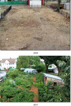 incredible 7 year before and after permaculture garden