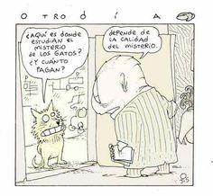 Misterio de los gatos 1