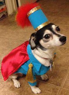 It's a King Antonio DOG. #sanantonio #fiesta #weloveyourdog @pawsatx