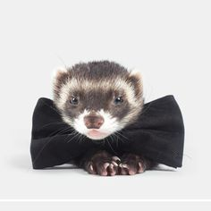 See this Instagram photo by @the.modern.ferret • 612 likes