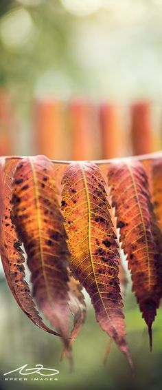 Photography by Nicholas Speer  #photography #leaf #art #nature #tree