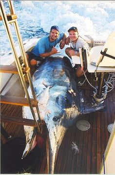Photo of black marlin weighing 1386 lbs - Great Barrier Reef, Australia #PutDownYourPhone #Carde