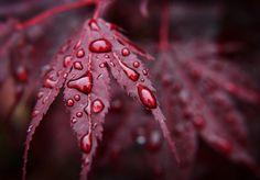 #burgundy #october #rain