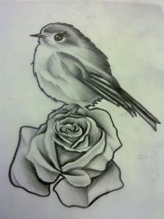 Rose and Bird Sketch