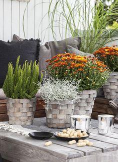 Få det koselig på terrassen med blomster