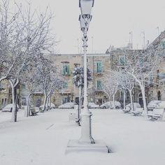 #magia#piazzaporto#giovinazzo#gennaio2017#natura#regali#gioia#incanto#meraviglia#neve#alberi#fiocchi