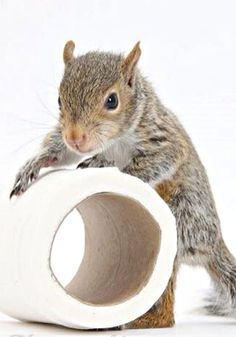 Caught squeezing the Charmin