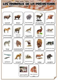 D Alphabet Letter Recognition Worksheet Day Camp Activities, Cro Magnon, Elegant Nails, Letter Recognition, Stone Age, Cycle 1, Multiplication, Santa Fe, Evolution