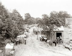 Wagons lined up at the cotton gin ~ Old Picture of the Day: Cotton Wagons