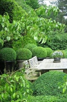 Boxwood in Garden