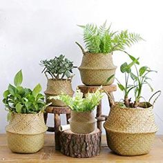 Folding Seagrass Laundry Basket Rattan Flower Basket Vase Planter Nursery Pot Belly Basket Straw Toys Organizer Home Decor Price: & Flat Rate Shipping Hanging Flower Pots, Flower Planters, Planter Pots, Planter Garden, Hanging Basket, Flower Baskets, Potted Flowers, Potted Plants, Indoor Plants