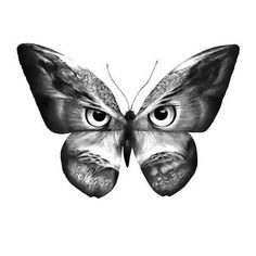 Black and gray butterfly with owl face.