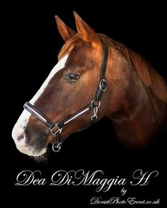 Fine Art Equestrian Portraits and Stable Visits - Horse Photographer UK Great Memories, Family Portraits, Equestrian, First Love, Horses, Fine Art, Animals, Family Posing, Animales
