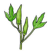Okra. lots of information on fruits and vegetables