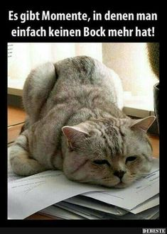 Funny Good Morning Memes to Kickstart Your Day Cute Cats, Funny Cats, Funny Animals, Cute Animals, Fluffy Kittens, Cats And Kittens, Monday Face, It's Monday, Monday Blues