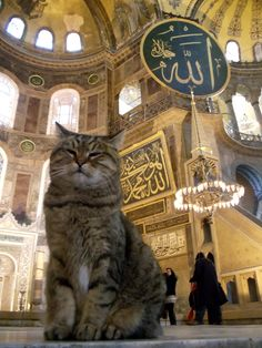 This cat lives in Istanbul's Hagia Sophia for 14 years😍 IloVeGli♥️ Cute Cats And Kittens, I Love Cats, Crazy Cats, Hagia Sophia, Animals And Pets, Cute Animals, All About Cats, Beautiful Cats, Cat Life