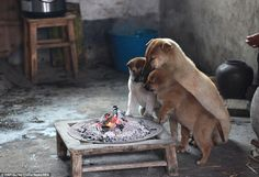 Seeing What These Stray Puppies Do Together Just Destroyed Me. Even Though It's Pretty Genius. | World Truth.TV