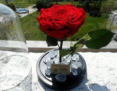 💥A Shiny Day Make Everyone Happy💥 #shinyday #sun #happiness #infinityroses #preservedroses #foreverroses #roseslover #roses #redroses #red #flowershots #flowerinbox #flowerlovers #lovetocreate #beautyandthebeastrose #handmade #nofilters #decoflowers #decoration #creations #thessaloniki #floristshop #greece #anthos_theartofflowers  Για περισσότερες πληροφορίες στειλτε μας προσωπικό μήνυμα ❤ Shiny Days, Preserved Roses, Flower Art, Red Roses, Glass Vase, Alcoholic Drinks, Happy, Flowers, How To Make