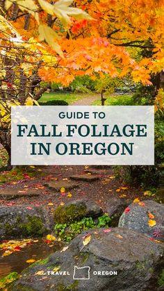 Oregon Road Trip, Oregon Travel, Travel Usa, Road Trips, Places To Travel, Places To See, Travel Destinations, Oregon Falls, Oregon Coast