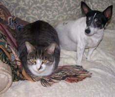 The Trad Pad - 109832066184784422341 - Picasa Web Albums Boston Terrier, Albums, Cats, Animals, Picasa, Gatos, Animales, Animaux, Kitty