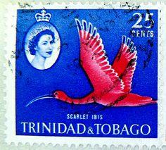 Scarlet ibis, Trinidad & Tobago