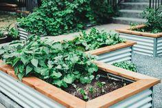 Garden Design Images, Garden Design Plans, Backyard Garden Design, Vegetable Garden Design, Small Garden Design, Raised Bed Garden Layout, Building A Raised Garden, Raised Garden Beds, Raised Beds