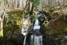 The Wood of Cree is the largest area of ancient woodland in Southern Scotland, and an RSPB nature reserve. This walk climbs up through the trees, giving some good open views and visiting waterfalls - and an otter pool on the River Cree.