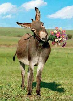 :)mes monsieur offert un bouquet de fleur a votre femme regarder mème l'ane offre des fleur a sa bourrique (papy pas gentil)