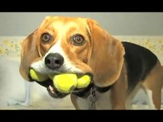 awesome Funny Videos Of Funny Dogs And Puppies Compilation 2016