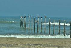 Bath time, Corolla Beach, NC. Wildlife. Jennifer Barley