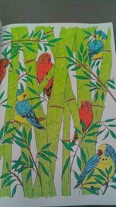 Mandala perruches et bambou by Charlie-Audern