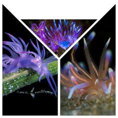 Sea slug collage 11