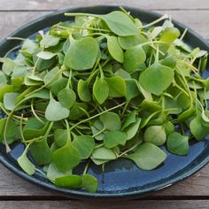 Natural Remedies, Spinach, Succulents, Clean Eating, Herbs, Vegetables, Cooking, Garden, Nature