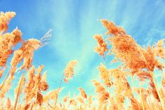 Enjoy The Silence; fields of wheat by Pink Sherbet Photography, Flickr ...