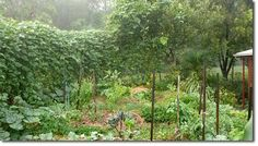 How to Establish a Small Space Intensive Food Garden - The Permaculture Research Institute