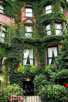 Ivy House, Boston, Massachusetts