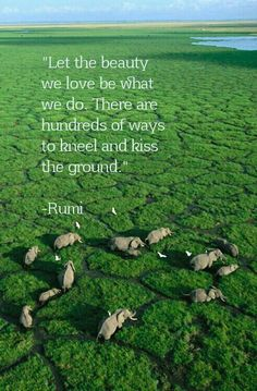 """""""Let the beauty  we love be what  we do. There are  hundreds of ways  to kneel and kiss  the ground.""""   -Rumi"""