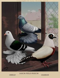 Saxon Shield, Field Pigeon and Suabian, Fulton Style, art by Gary Romig