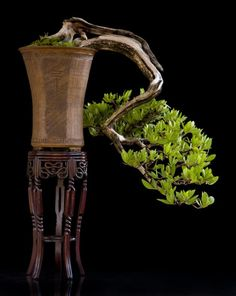 Art Bonsai Tree