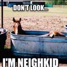 horse humor cartoon - Google Search