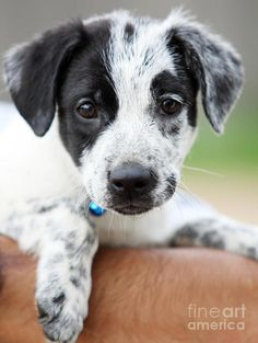 Love a spotted pup !!!