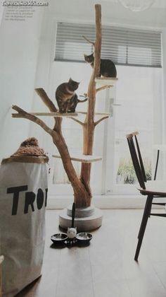 Außergewöhnlich Zeug, die Sie beim Konstruieren eines benutzerdefinierten Kratzbaums vermeiden sollten #benutzerdefinierten #eines #konstruieren #kratzbaums #sollten #vermeiden