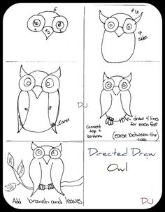 directed drawing owl
