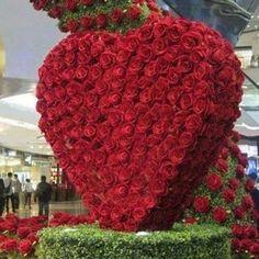 Exotic Flowers, Beautiful Roses, Red Roses, Valentines, Heart, Plants, Luxury, Large Flower Arrangements, Wedding