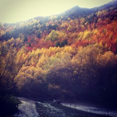 Arrowtown Autumn April 2012