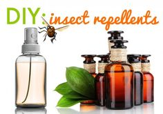 DIY: Homemade Insect Repellent Sprays and Lotions